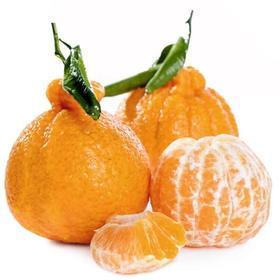 不知火柑橘  500g
