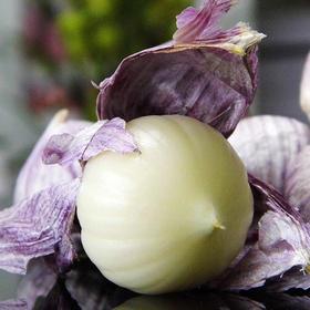 云南紫皮独头蒜 蒜瓣肥大 多汁蒜香 现摘先挖新鲜直达 3斤装