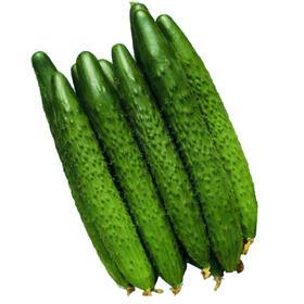 黄瓜   500g