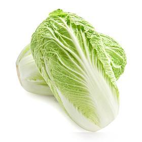大白菜  1500g