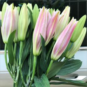 云南昆明基地直发真花鲜花花束香水百合玫瑰