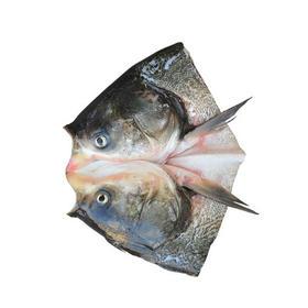 【安全配送】丹江口鱼头500g以上