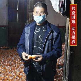 一口爆汁的湘西椪柑  好吃不上火 坚持自然成熟 不催熟不打蜡 产地直发新鲜直达 带箱约10斤