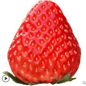 【安全配送】奶油香莓草莓2.2~2.5斤装(红颜、章姬)丨每天限量30份