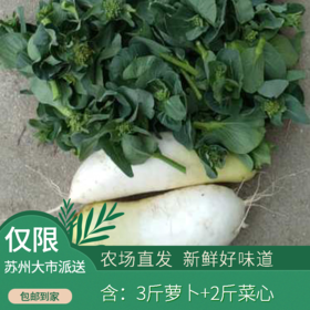 庞庞山—蔬菜组合(萝卜+菜芯或包心菜)5斤装(次日发)