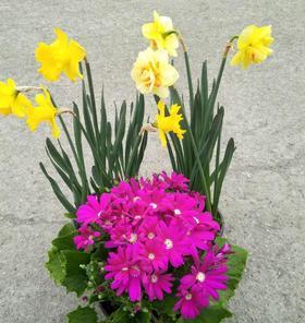 鲜花组合套餐   3种鲜花搭配更划算