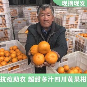 爱心助农 | 四川高山酸甜柑橘当季新鲜现摘现发 黄果柑8斤装