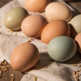 草本五彩土鸡蛋 | 零激素,营养高吸收快,水煮、翻炒超香,全家都爱吃