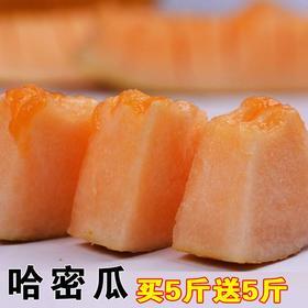 海南哈密瓜10斤香瓜网纹甜瓜脆甜