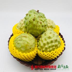【一件代发】广州海鸥岛释迦果精品大果 400-500g/ 个   2个/份  2个/份(26到货)