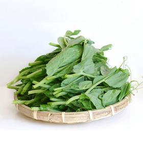 豌豆尖 500g