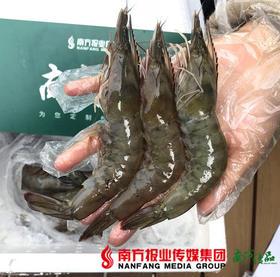 【珠三角包邮】冰鲜白对虾  3斤±2两/箱(4月10日到货)