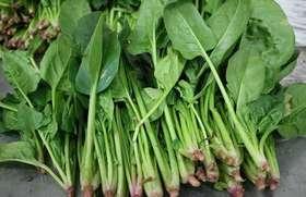 芦溪县 红苋菜0.7斤