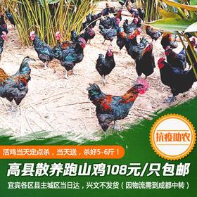 【抗疫助农】高县跑山鸡118元/只起包邮(公鸡杀好后5-6.8斤以上)!活鸡现杀,下单之前仔细阅读购买须知!