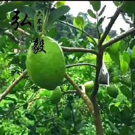 【弘毅六不用生态农场】六不用 青柠檬 顺季节 不套袋 无农残 2斤/份