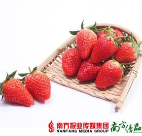 【珠三角包邮】丹东红颜有机草莓 300-400g/ 盒   2盒/份