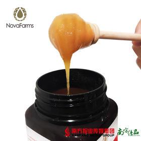 【全国包邮】星官庄麦卢卡蜂蜜 10+(250g/瓶)