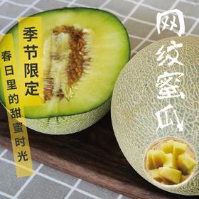[网纹蜜瓜 下单后6天内发出]香气馥郁 甜而不腻(2个瓜,约4.5斤)
