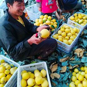 【包邮】19.9抢高县沙河新鲜柠檬5斤装,不打蜡,不泡保鲜剂,酸爽多汁!