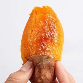 山东烟薯25号甜蜜薯
