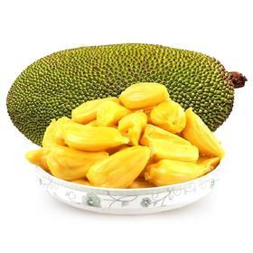 【海南直发】海南菠萝蜜 果肉金黄 现摘现发