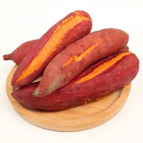 福建六鳌沙地蜜薯软糯香甜肉质细腻