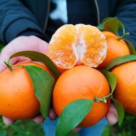 广西沃柑橘子新鲜蜜橘桔5/10斤当季整箱橘
