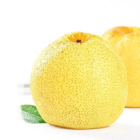 【严重滞销】安徽砀山酥梨8亿斤待销 个大脆甜爆汁