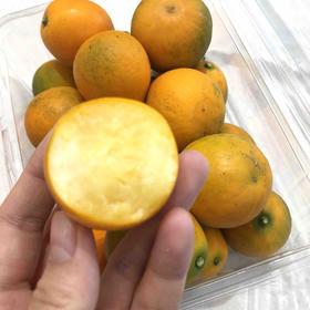 脆皮金桔|纯甜的小金桔,雾霾天必备。