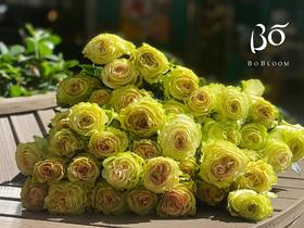 A级琉璃翠-花园玫瑰
