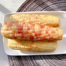 优选   甜糯小玉米 西双版纳  新鲜 速食 非转基因 不含防腐剂等 云南 玉米 4斤装 包邮