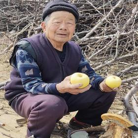 【助农产品】黄金奶油富士苹果 约4.5斤装 48小时内发货