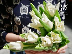 荷兰A+卷边白色风铃郁金香