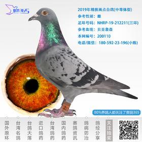 2019年精挑雨点台鸽-雌-编号200110