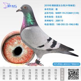 2019年精挑靓灰台鸽-雄-编号200119