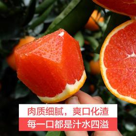 【助农战役】湖北秭归中华红血橙 水嫩多汁 肉红饱满