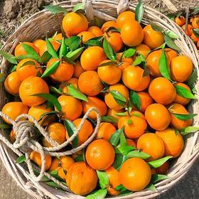 广西武鸣沃柑新鲜水果当季整箱9斤蜜桔橘子沙糖桔皇帝贡柑砂糖橘
