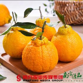 【珠三角包邮】四川不知火丑橘   5斤±2两 /份