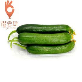 【整果】水果黄瓜 1斤装约4-5根