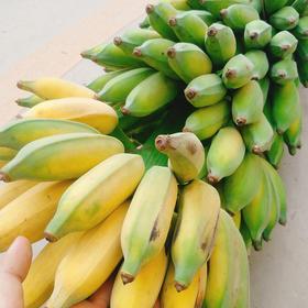 云南墨江野生小芭蕉农家自然生长小米蕉香蕉 5斤20个左右包邮 香甜浓郁