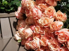 A级甜精灵玫瑰