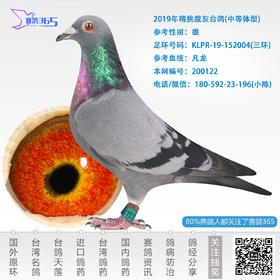 2019年精挑靓灰台鸽-雄-编号200122