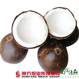 【珠三角包邮】海南老椰子 2斤±3两/ 个   2个/份(4月28日到货)