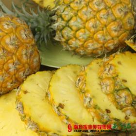 【珠三角包邮】新鲜徐闻大菠萝 多汁香甜  2斤±2两/个  2个/份