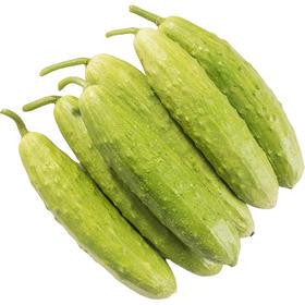 【精选】鲜嫩白玉黄瓜 | 清香脆嫩 清脆爽口 |5斤约20个【应季蔬果】