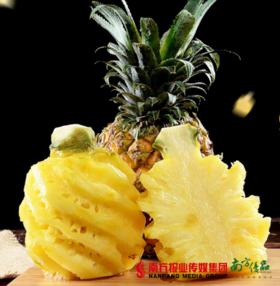 【珠三角包邮】新鲜徐闻大菠萝 多汁香甜  2斤±2两/个  2个/份(5月5日到货)