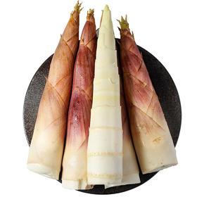 【精选】眉山(甜)雷笋 | 农家春笋新鲜现挖 鲜嫩脆甜 营养丰富 | 5斤装 【应季蔬果】