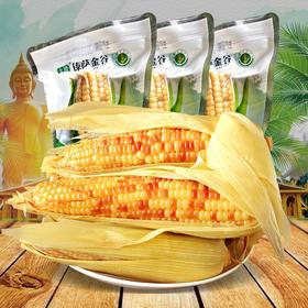 云南西双版纳香糯小玉米甜玉米棒小包谷4斤新鲜真空加热即食