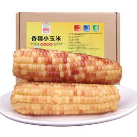 滇园香糯小玉米棒小包谷3斤  新鲜真空加热即食