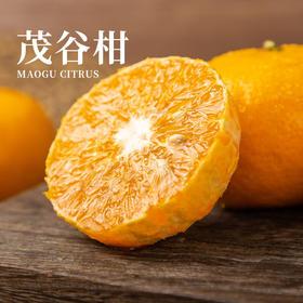 广西茂谷柑 皮薄 肉质柔嫩 鲜美多汁  现摘现发 3斤/5斤/9斤装 发带石灰粉的